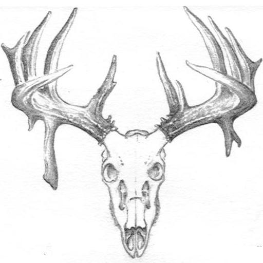 Montana Skullworks